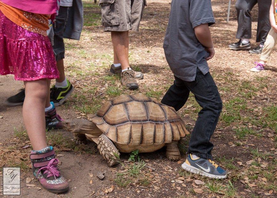 turtle-conga